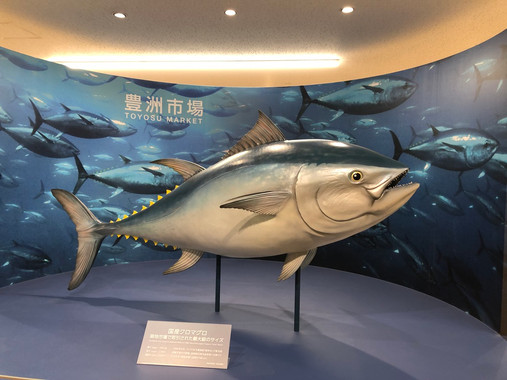 Toyosu Fish Market Visit