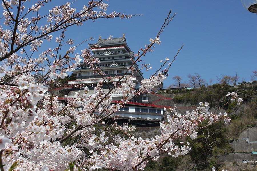 Atami Castle and Sakura