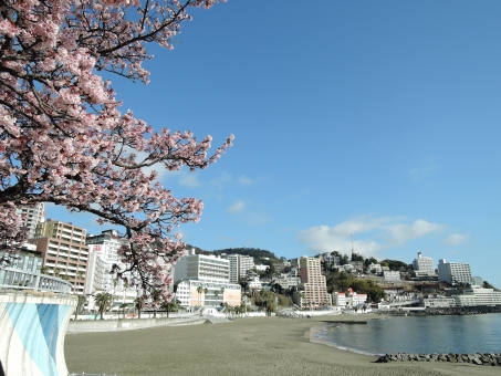 Cherry blossom and the beach