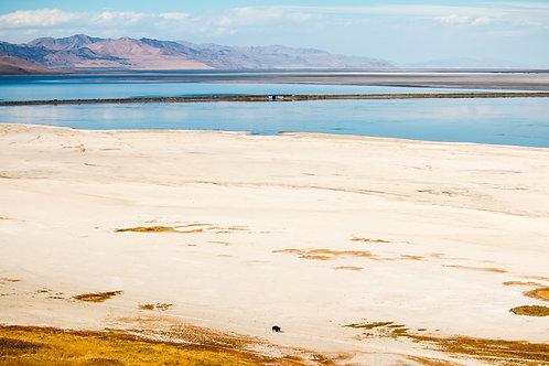 Sean Gorton   Lone Bison on Antelope Island   Photography