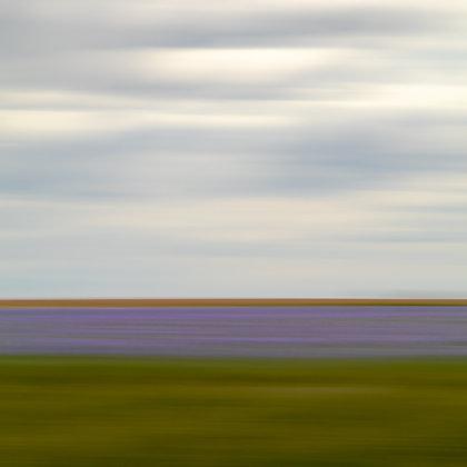 Lee Harper | Field of Flax
