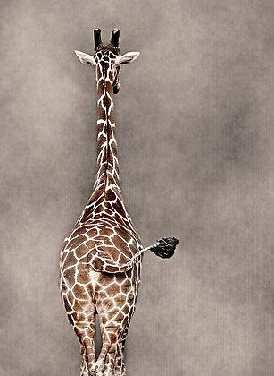 Sonya Lang | Giraffe Swag