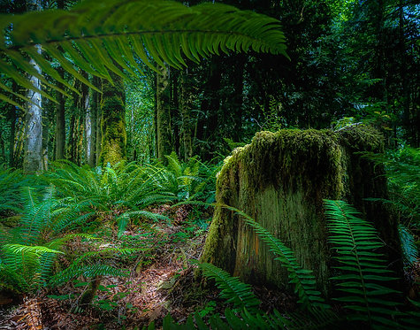 John Korvell | Last Stump | Photography