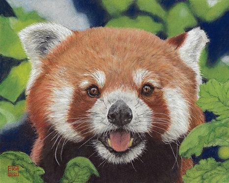 Carrie Howard | Red Panda | 2D