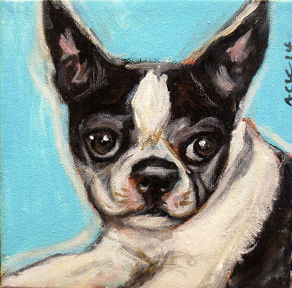 Angie Ketelhut | Portrait of a Boston Terrier
