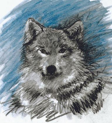 Jennifer Munson   Wolf