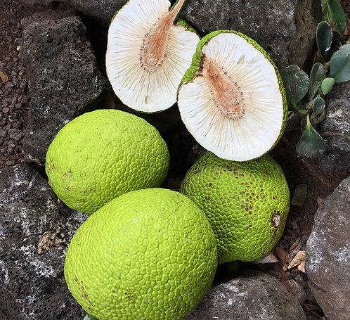Patti Livingstone | Breadfruit | Photography