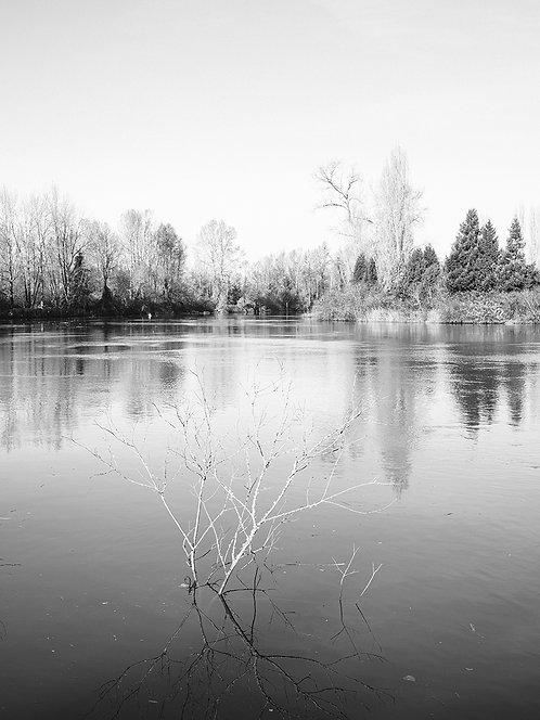 Dean Forbes | Winter bones | Photography