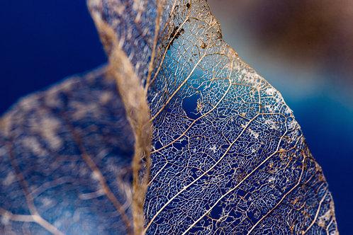 Sean Gorton | Ghost Leaf | Photography