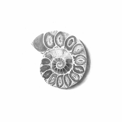Erin Nix | Fossilized Ammonite