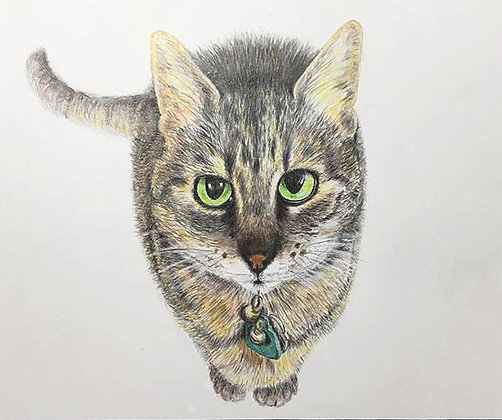 Janis Howes | Mia, Domestic Cat, Felis Catus