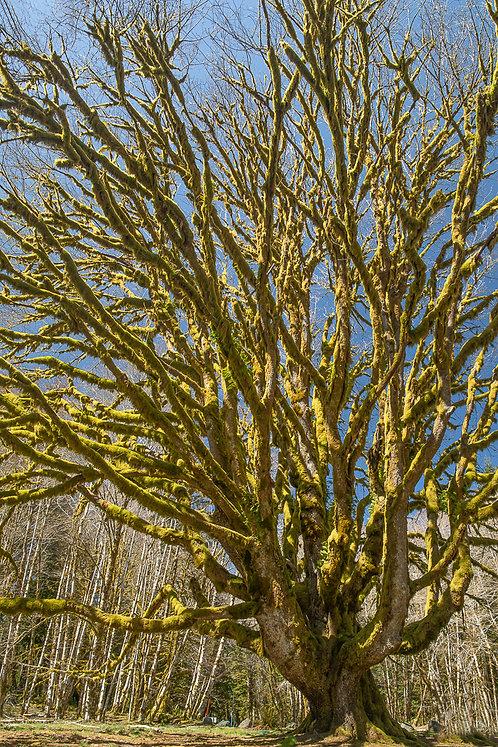 Dana Martell | Interesting Tree | Photography