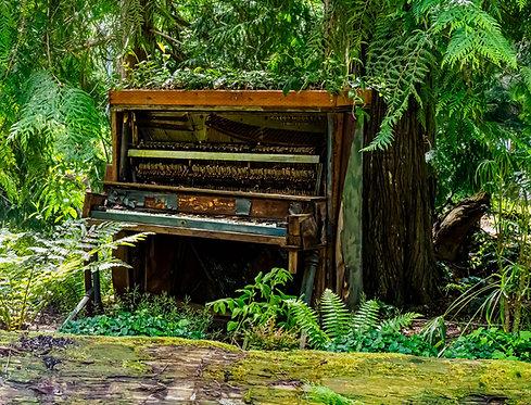 Lauren Heerschap | Piano Tree | Photography