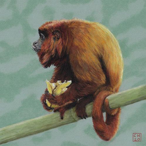 Carrie Howard   Howler Monkey   2D