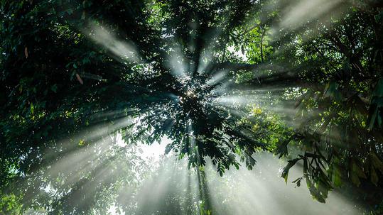 Quadro Natureza Contra Sol