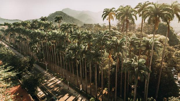 Quadro Jardim Botânico