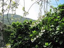 vacanze_levanto_affitto_giardino