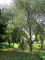 appartamenti_giardino_levanto