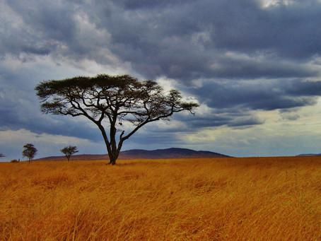 Soin de Vie(s): Femme exilée en Tanzanie et Magie noire - Recouvrement d'âme et Résilience...