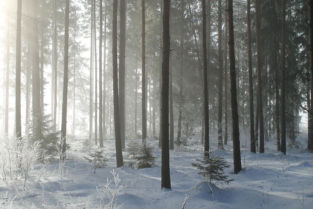 Mes soins énergétiques racontés : Soin de Vie(s): Ancêtres vikings - Chamans nordiques. Survivre dans la nature, solitude et intrusion