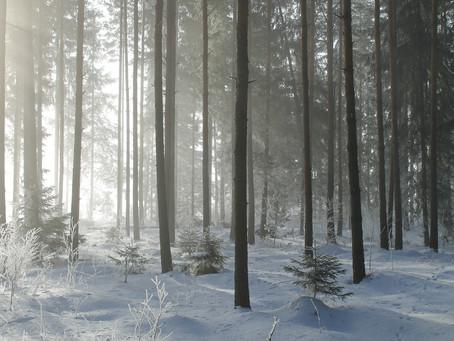 Soin de Vie(s): Ancêtres vikings - Chamans nordiques. Survivre dans la nature, solitude et intrusion