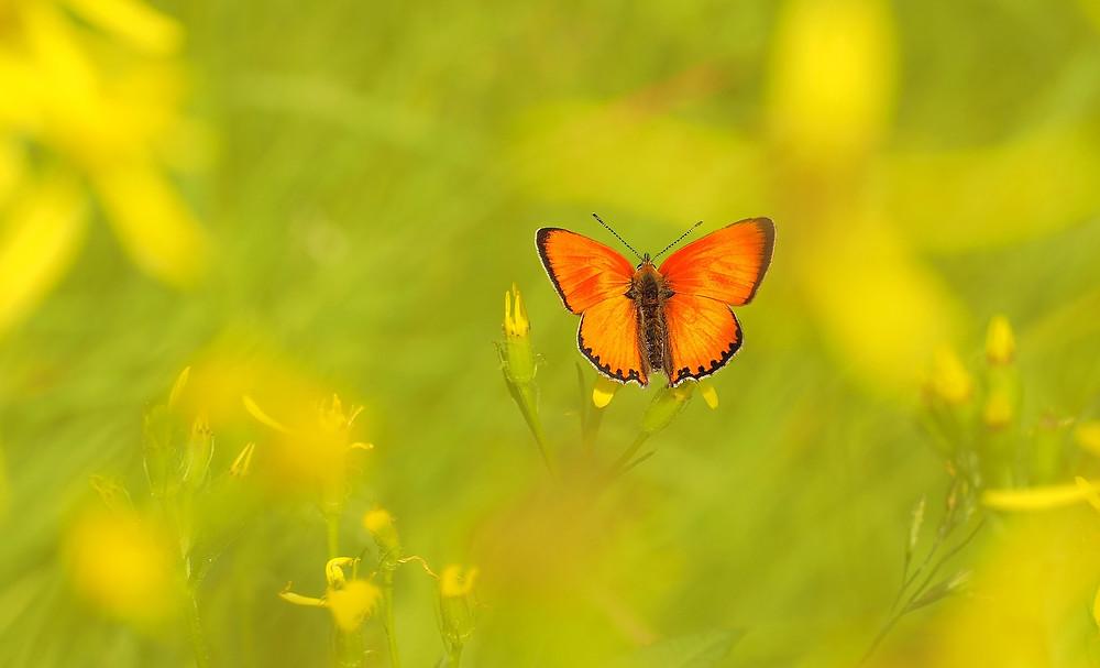 """Soin énergétique à thème """"Déployer son Pouvoir Intérieur"""" : Le soin de F: Nouvelle Vision et Liberté de Papillon"""
