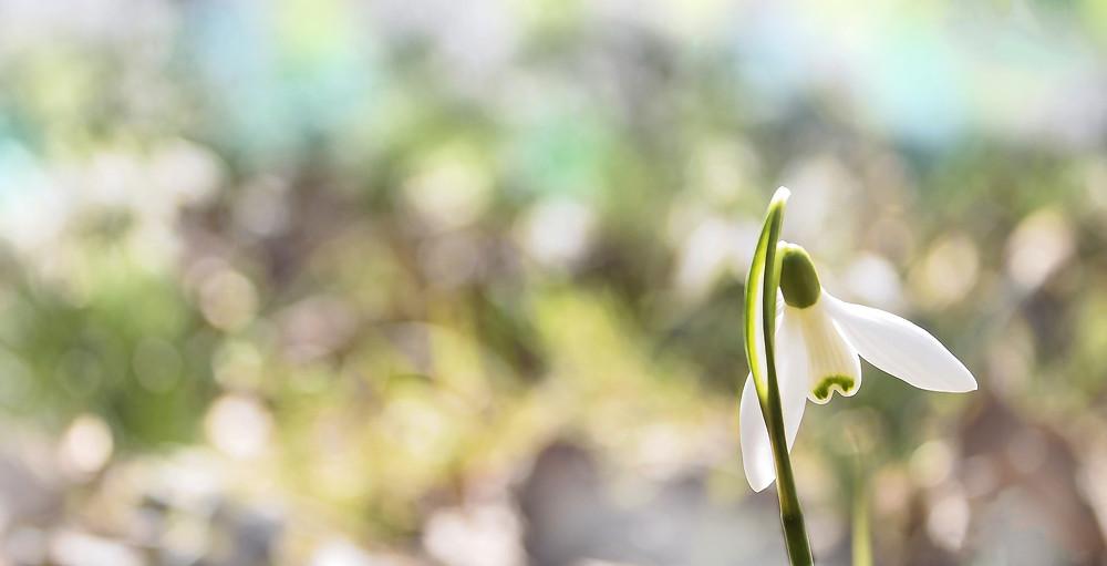 Soin énergétique Ciel et Terre de R : Se relier, se souvenir, et revenir au printemps...