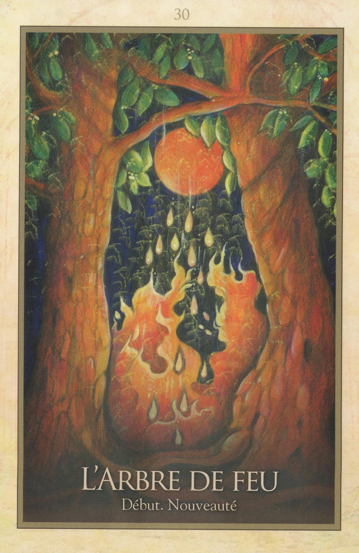 Carte tirée de l'Oracle de Gaïa de Toni Carmine Salerno : L'Arbre de Feu, début, nouveauté