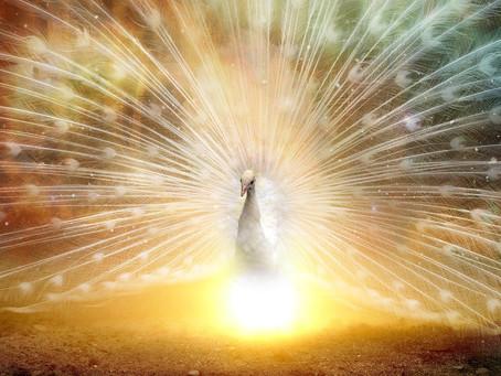 Soin Portail 24-6: Développer ses capacités de Manifestation et de Création, Amplifier son Expansion