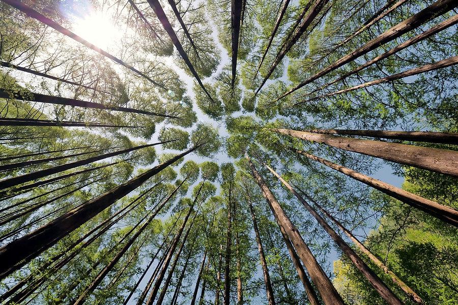 tree-4450514_1920_edited.jpg