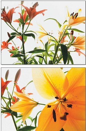 07078/18 Summer Florals
