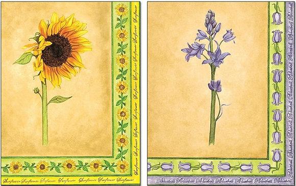 323/23 Sunflower & Bluebells