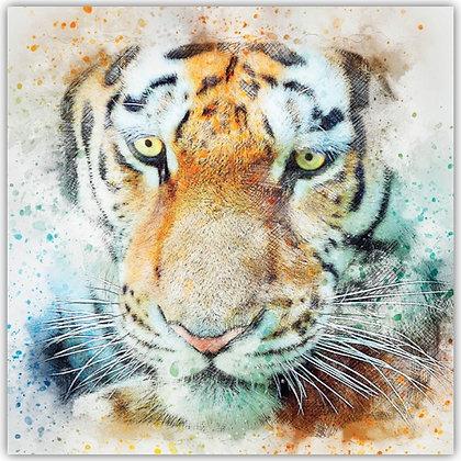 TDT18014 Tiger