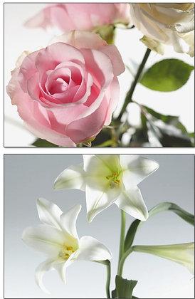 07009/10 Rose and Iris