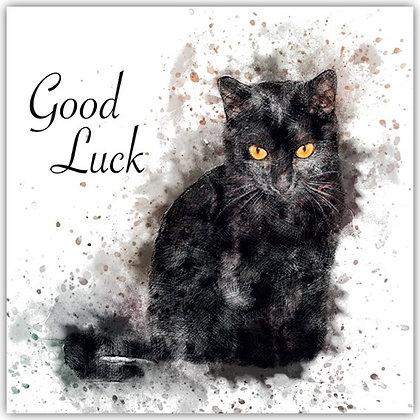 DT18008 Black Cat