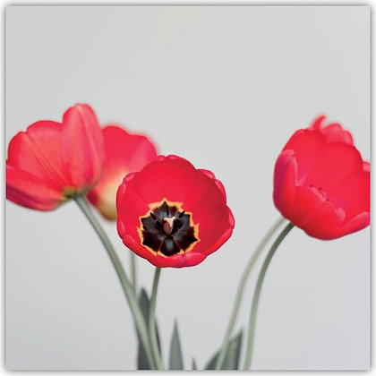 DT18022 Red Tulips