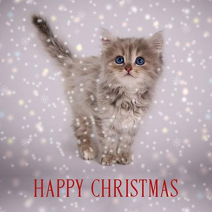 T17071 Kitten in Snow - Cost per pack isjust £1.50 (inc vat) rrp £3.00