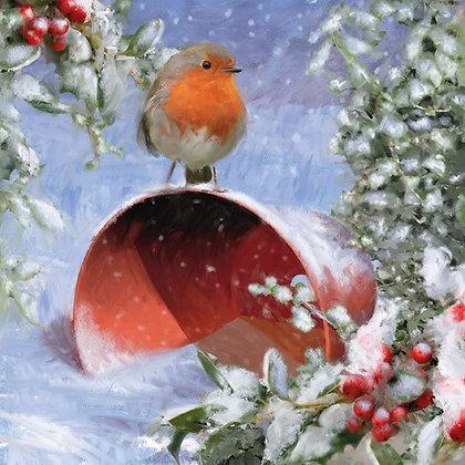 16107 Robin on Flowerpot