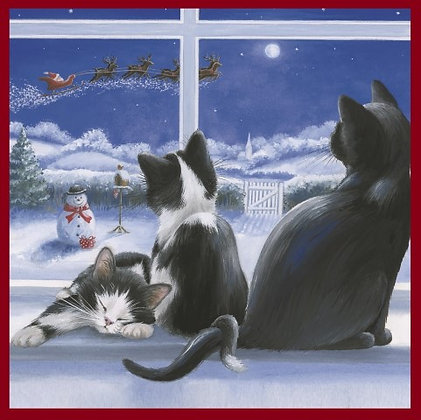 T17276 Cats on Christmas Eve - Cost per pack isjust £1.50 (inc vat) rrp £3.00