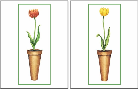 TEA08/09 Tulips