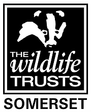 Somerset Wildlife Trust.png