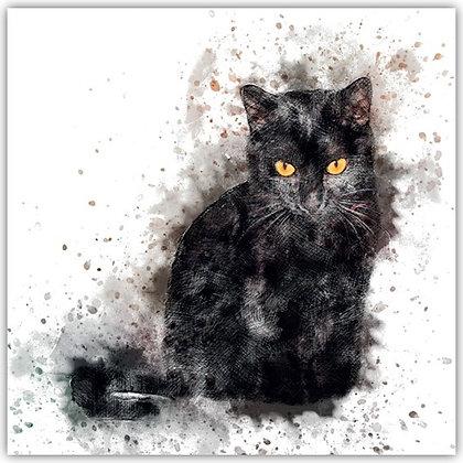 DT18009 Black Cat