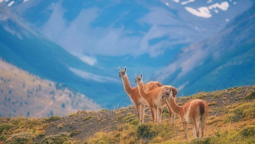 Llama2_edit.jpg