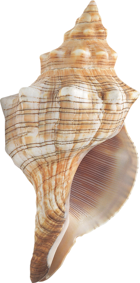 Conch%20-%202472x1225_edited.png