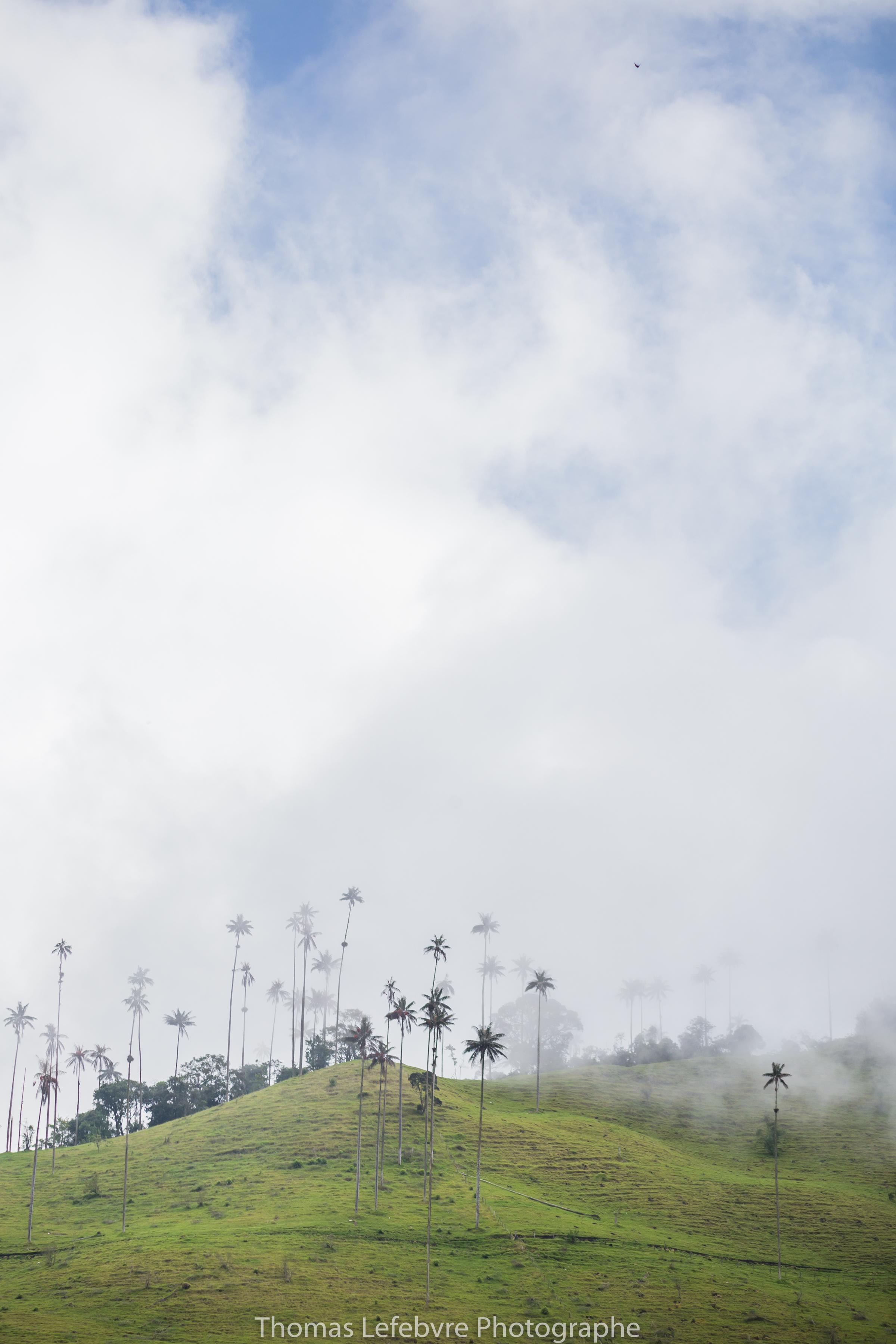 VALLE DE COCORA//COLOMBIA