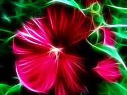 Hibiscus Spell