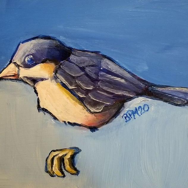 Delineated Chickadee