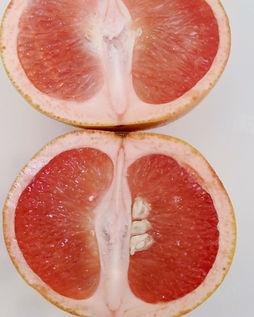 Shimmer Chef Grapefruit Essential.jpg