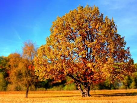 Il ramo d'oro
