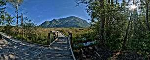 pilotis-paysage-reserve-naturelle-marais